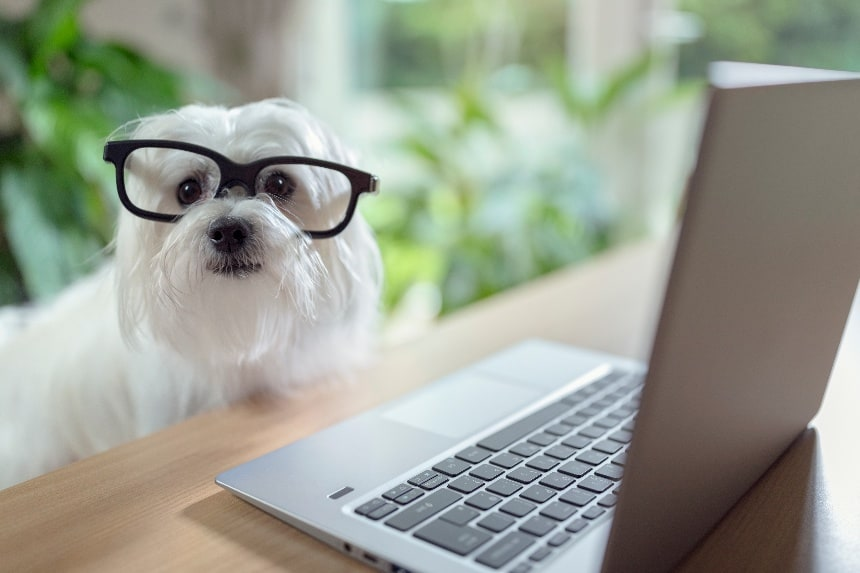 5 Reasons Why Your Pet Business Needs Branded Email Addresses