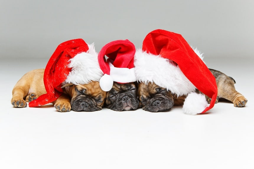 5 Ways to Market Your Dog Boarding Business for the Holiday
