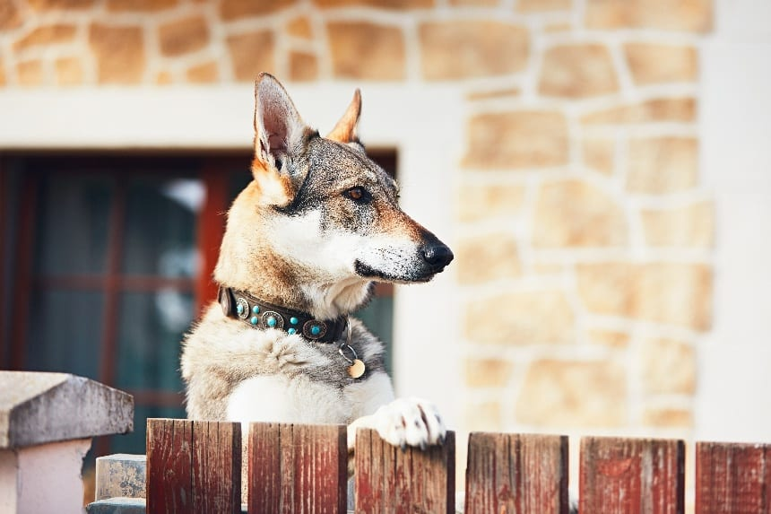 5 Simple Steps on Starting a Dog Boarding Business