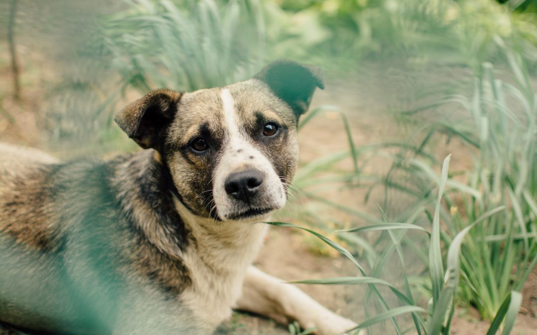A Pet Owner's Guide to Preventing and Treating Ticks