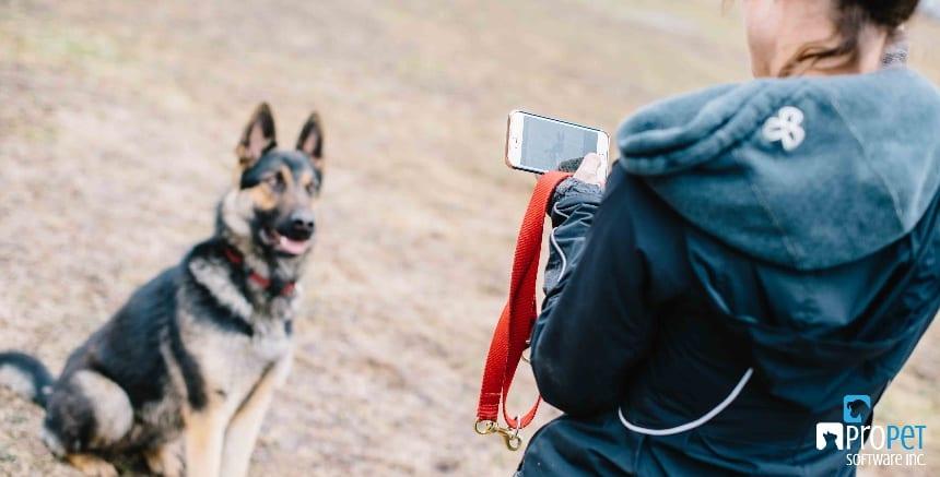Pet Photography 101