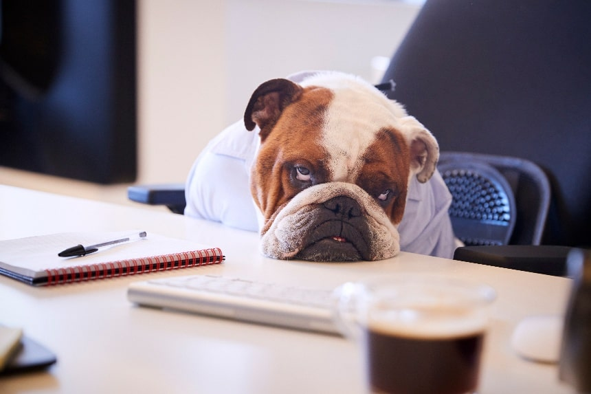 Why You Should Stay Away From Free Kennel Software