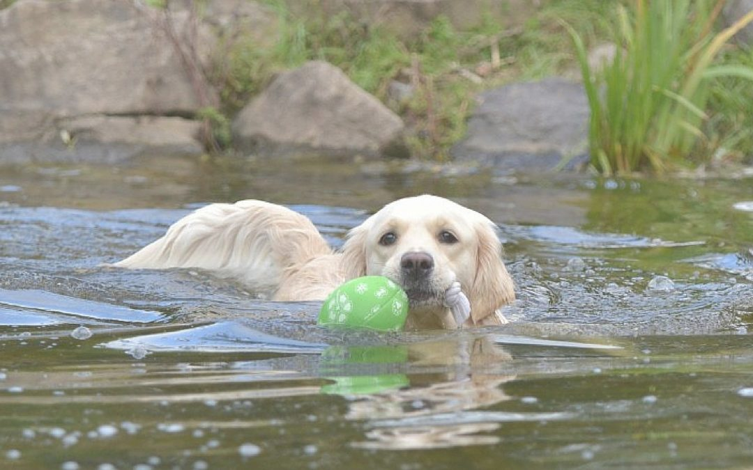 Safe Swimming Tips for Dogs