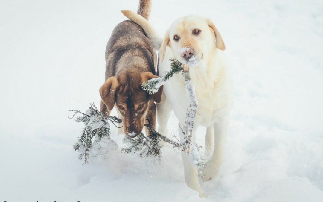The Ultimate Pet Business Holiday Guide