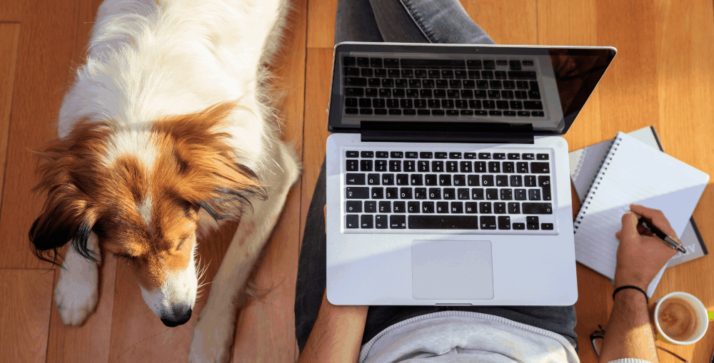 Why Social Media is Important for Your Pet Business