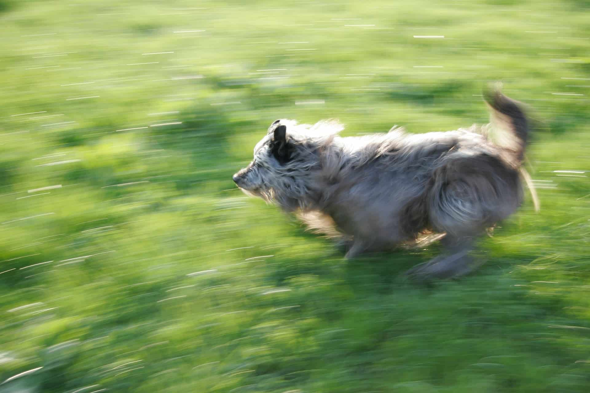 Shutter Speed for Pet Photography 3
