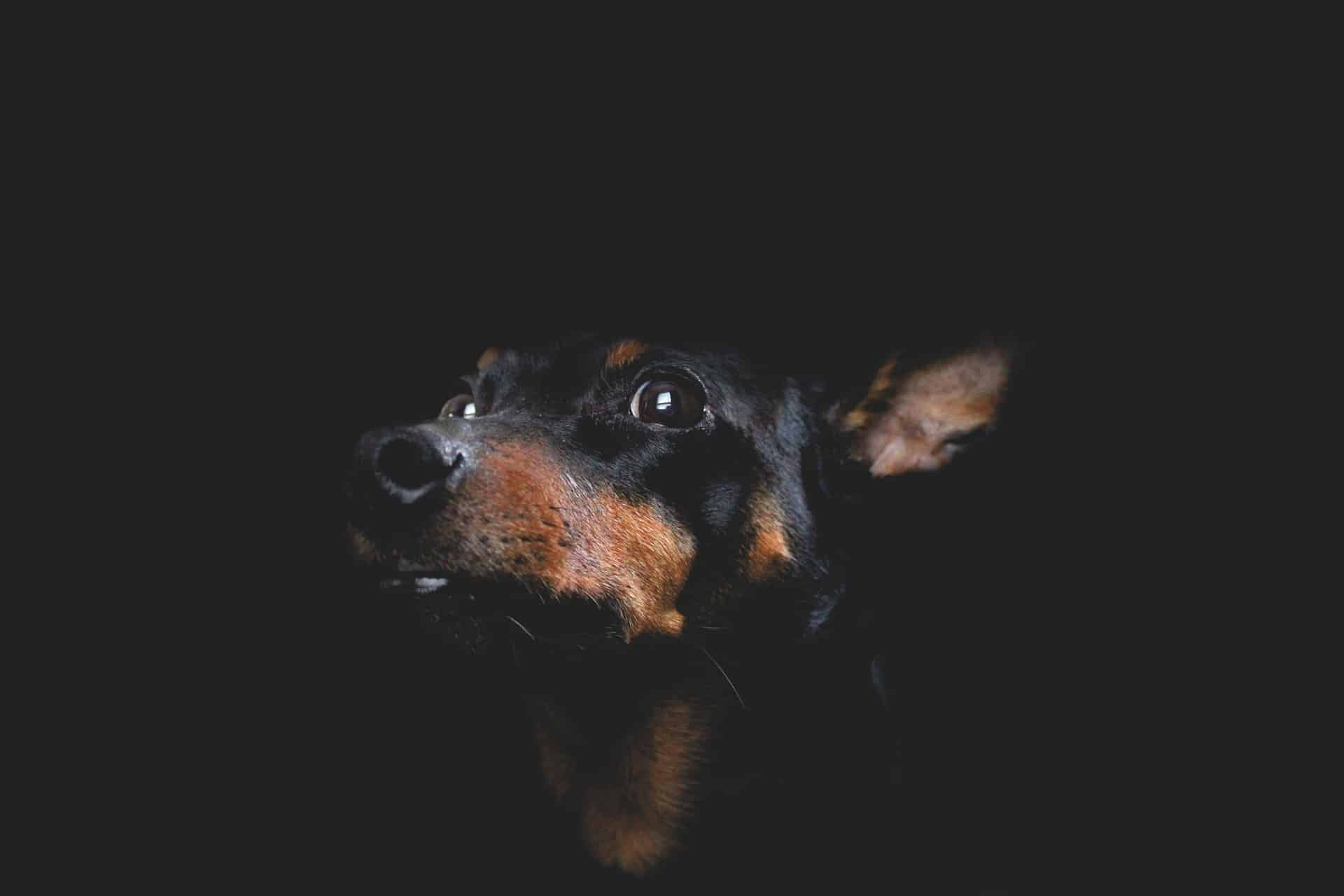 Taking Better Low-Light Pet Photos Using ISO 3